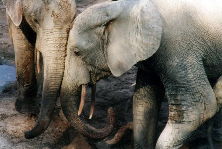 whale-songs-and-elephant-loves-katy-payne