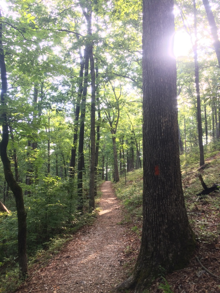 sunset-trail-hiking-from-balanced-rock_35963377176_o